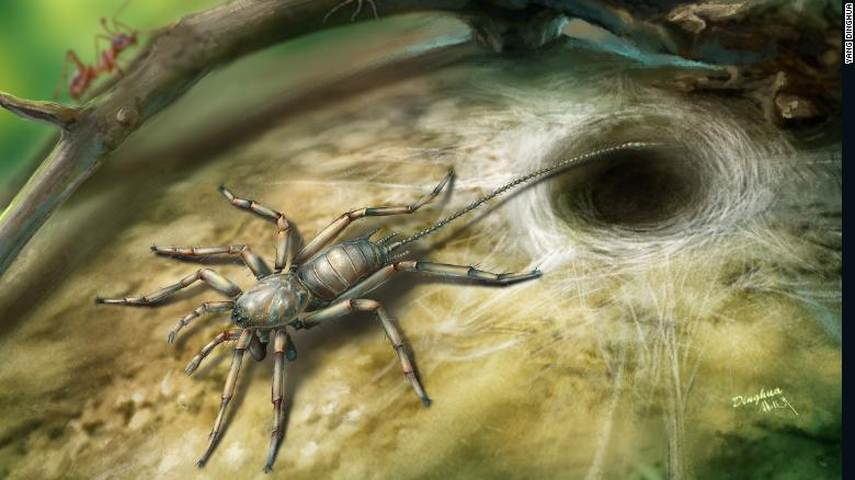 An artist's rendering of what the prehistoric spider might have looked like.