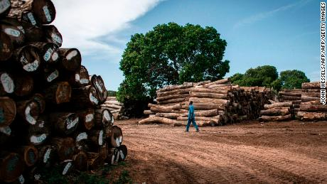 A worker walks in a storage bay of a logging company in Mozambique.