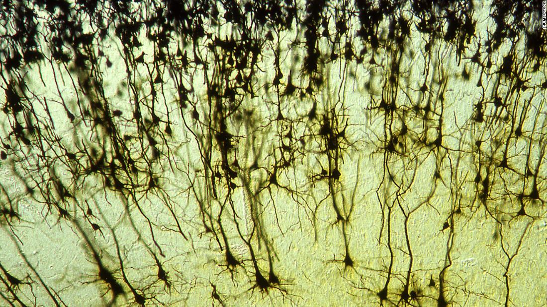 Psychiatric illnesses share gene activity, study suggests