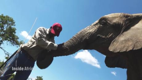 Inside Africa Getting up close and casual with elephants C_00001825