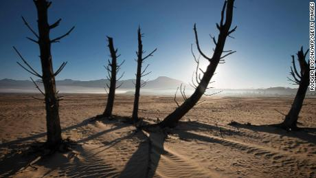 A picture taken on May 10, 2017 shows bare sand and dried tree trunks standing out at Theewaterskloof Dam, which has less than 20% of it's water capacity, near Villiersdorp, about 108km from Cape Town.