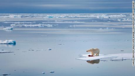 Arctic temperatures surge in the dead of winter