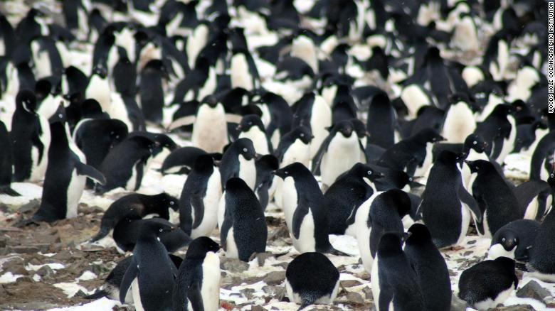 A Lost 'Supercolony' Of Penguins Was Discovered In The Antarctic