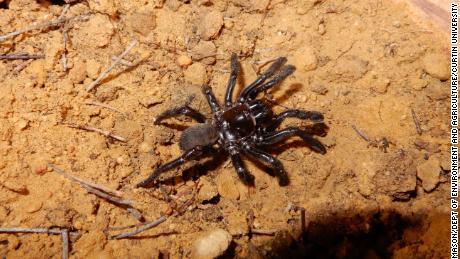 World's Oldest Spider Has Died