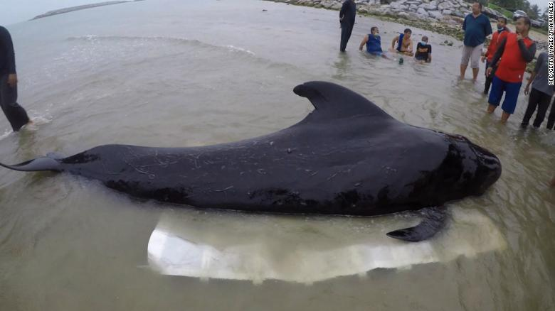 Whale dies after swallowing 17 lbs of plastic