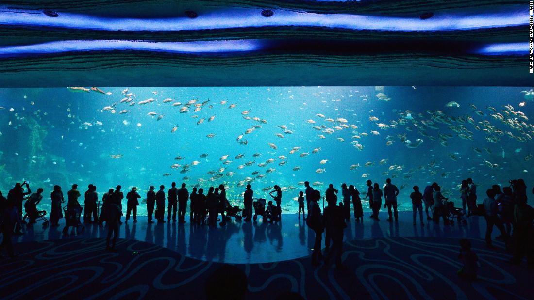 The secrets behind immersive aquarium design