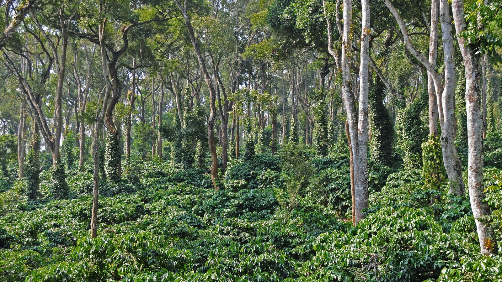 Evolve Back: One of India's greenest resorts