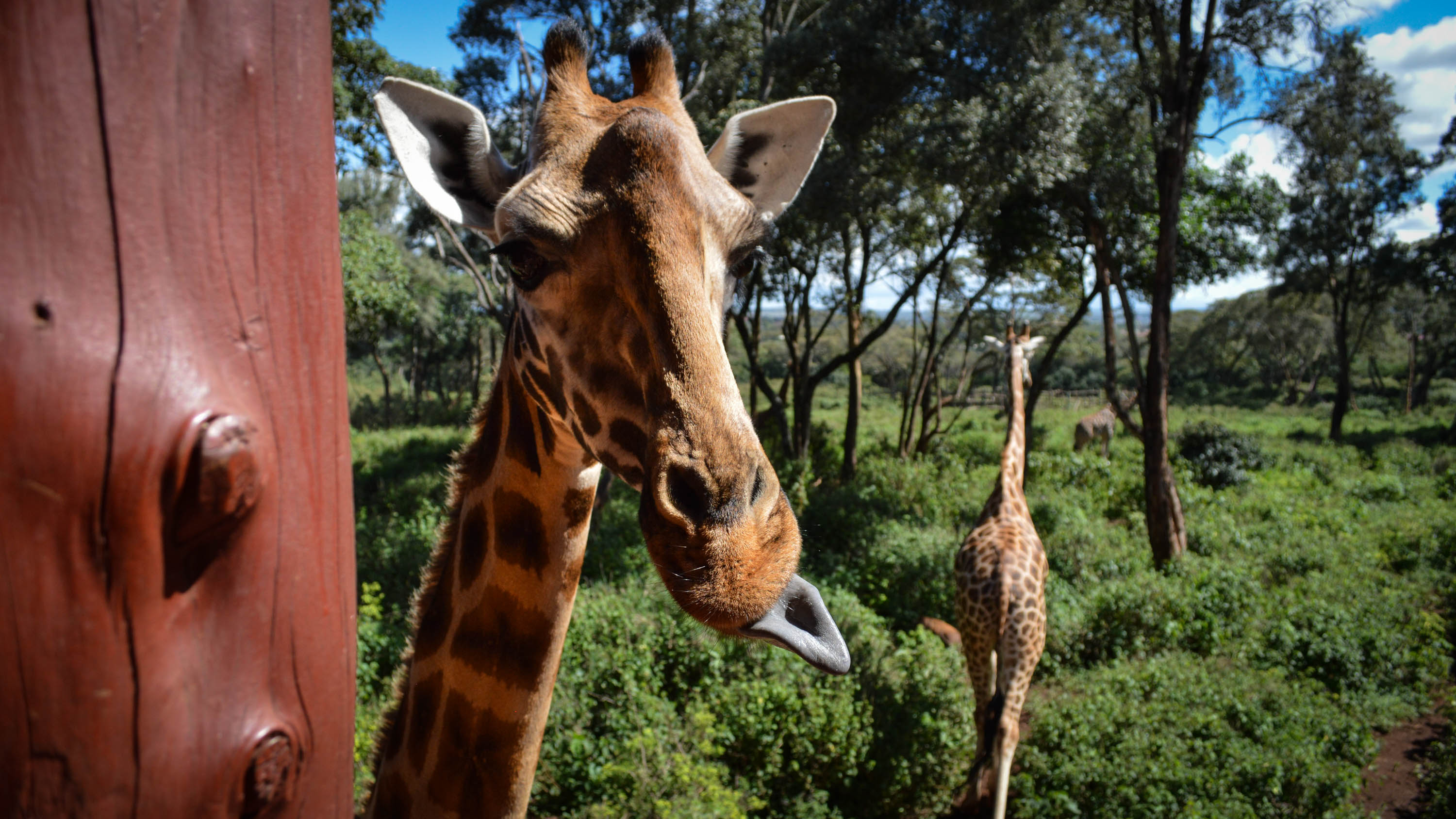 Best things to do in Kenya: 20 terrific ideas for your trip | CNN Travel