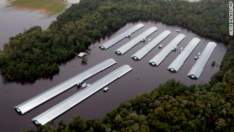 Hog deaths, manure flooding from Florence seen surpassing 2016 hurricane