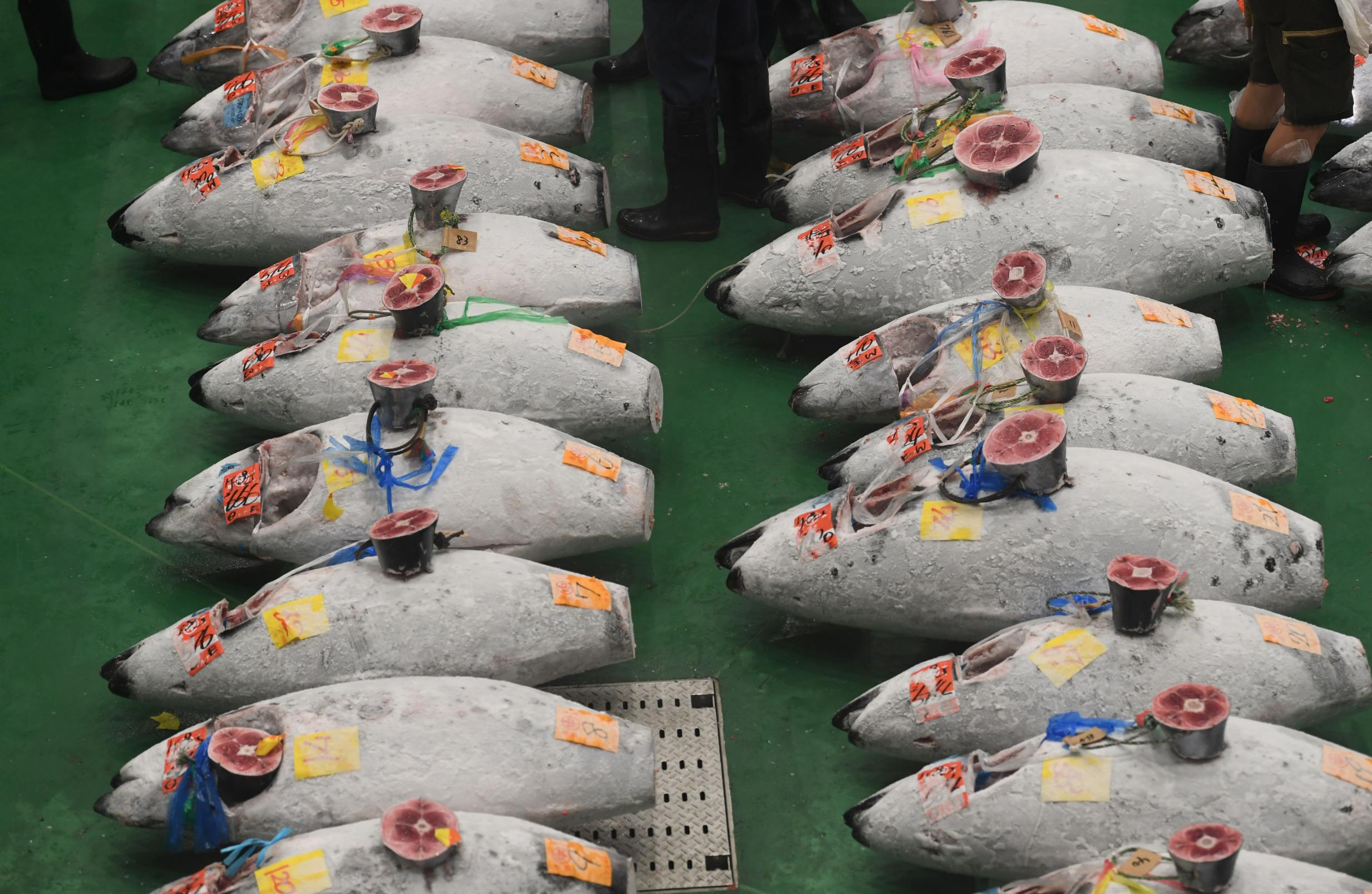 Image result for toyosu fish market
