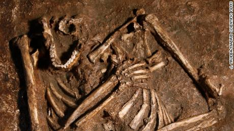 Neanderthals might not be the hunched cavemen we thought they were, 研究说
