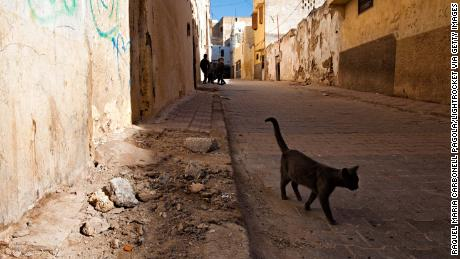 British tourist bitten by cat in Morocco dies from rabies
