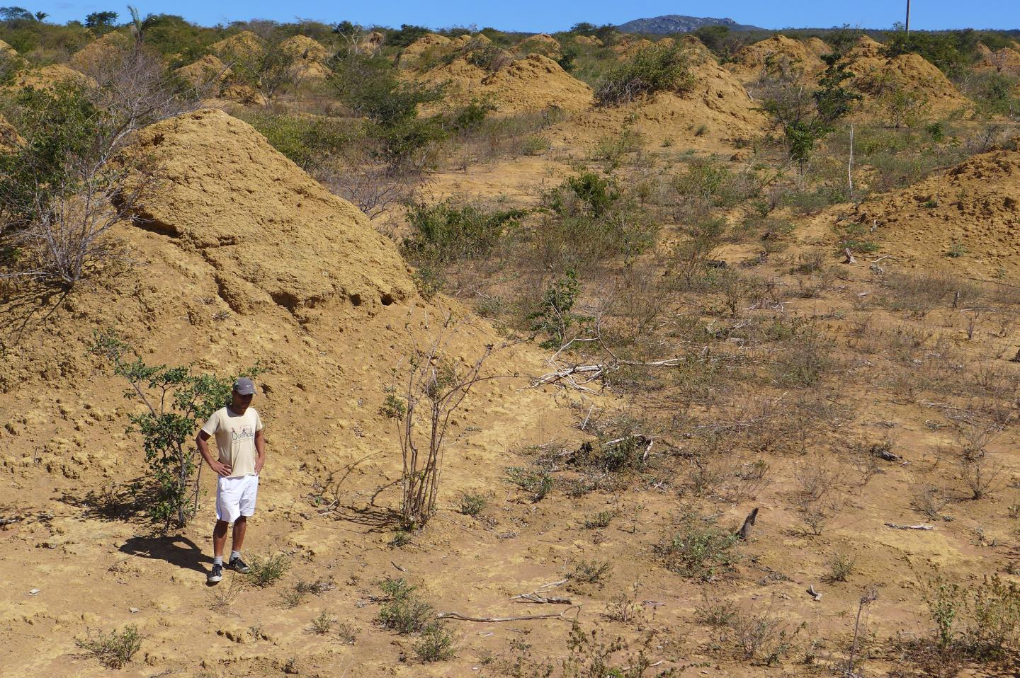 Ancient Termite Megapolis As Large As Britain Found In Brazil Cnn Travel