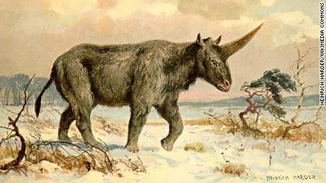 Siberian Unicorn may have walked the earth alongside humans