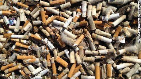 Cigarette butts found during a beach cleanup in Oregon.
