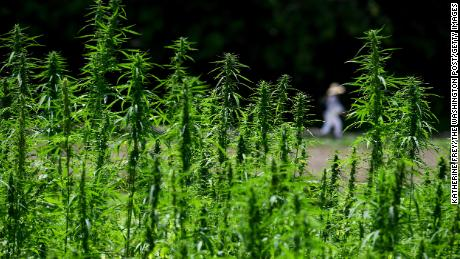 With OK from Congress, US hemp market set to boom