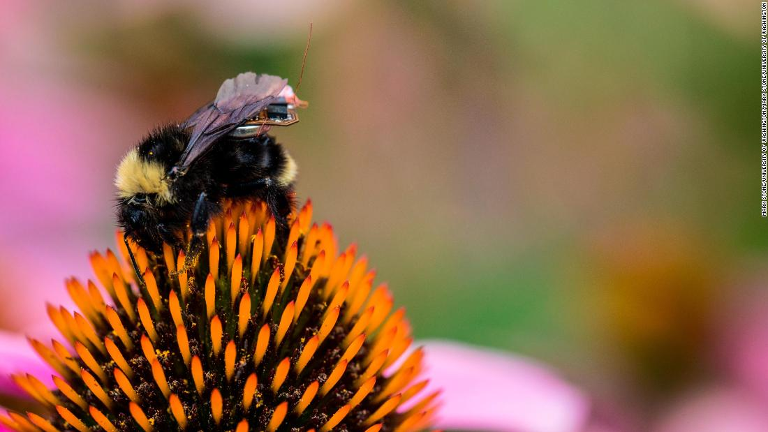 Natonal Honeybee Day: 7 simple things you can do to save the bees - CNN