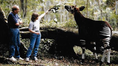 Rosmarie and Karl Ruf feeding an okapi.
