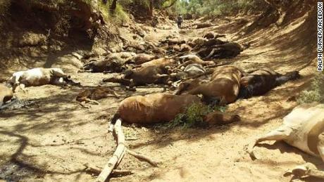 Se encontraron caballos salvajes muertos en un pozo de agua seco en el Territorio del Norte, Australia.