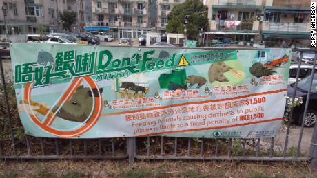 Posters warning the public not to feed wild boars are a common sight in Hong Kong.