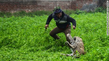 Panicked leopard goes on rampage in Indian village