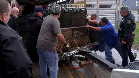 Rescuers tranquilized the tiger before pulling it out of the abandoned home.