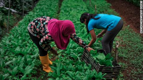 Workers at a farm in the Cameron Highlands. Opposition parties recently claimed a major byelection victory in the seat, fueled largely by Malay Muslim voters.