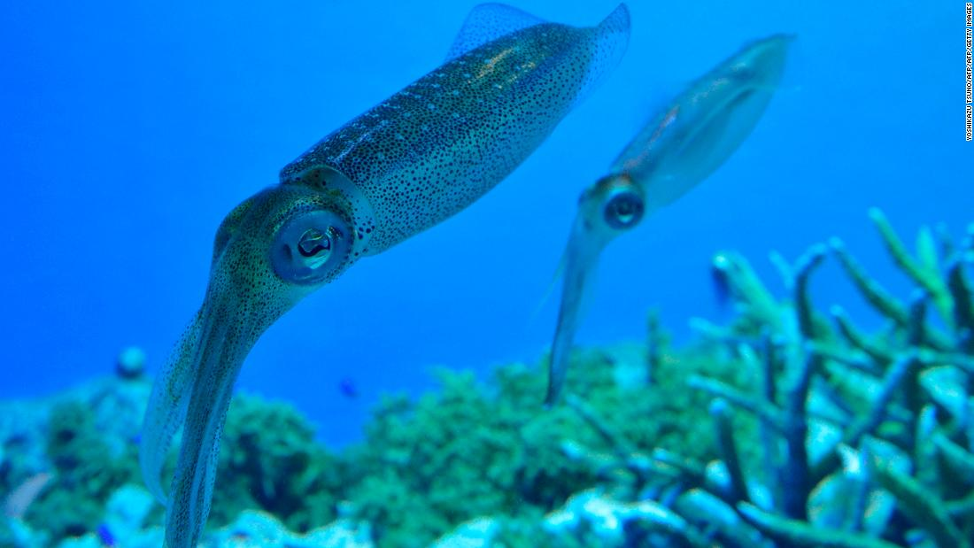 Could squid protein be an eco-friendly answer to our plastic problem? - CNN