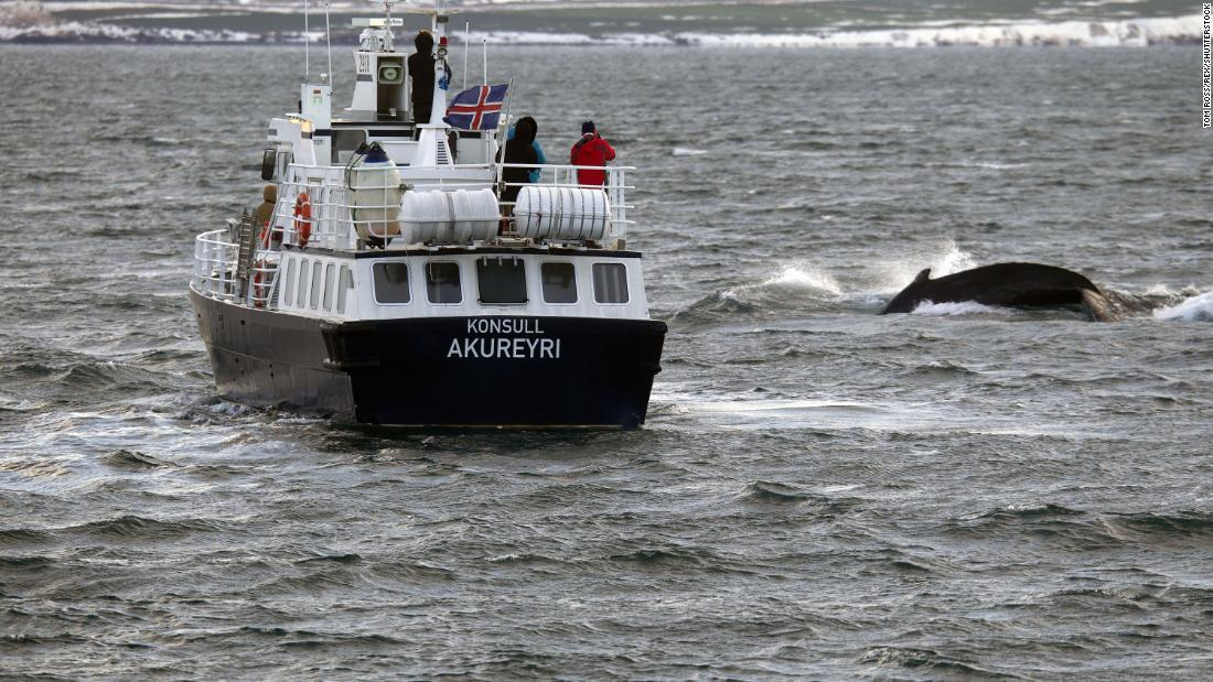 Iceland will allow more than 2,000 whales to be killed within next five years - CNN