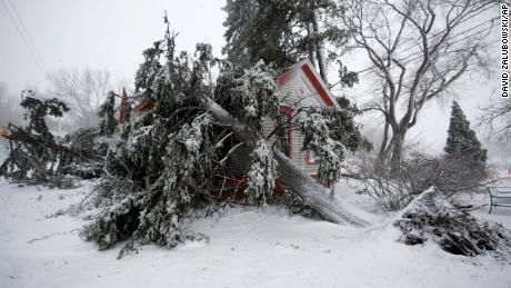 Trees snapped by high winds from a late winter storm packing hurricane-force winds and snow cover the Eugene Field house in Washington Park Wednesday, in Denver. (AP Photo/David Zalubowski)