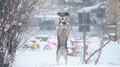 A dog is seen peeking over a chain link fence during a blizzard warning hitting southeast Wyoming on Wednesday.