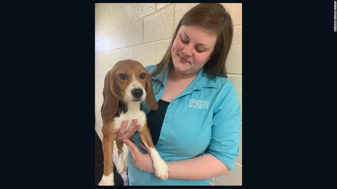 Beagles force-fed pesticides, now released and up for adoption - CNN