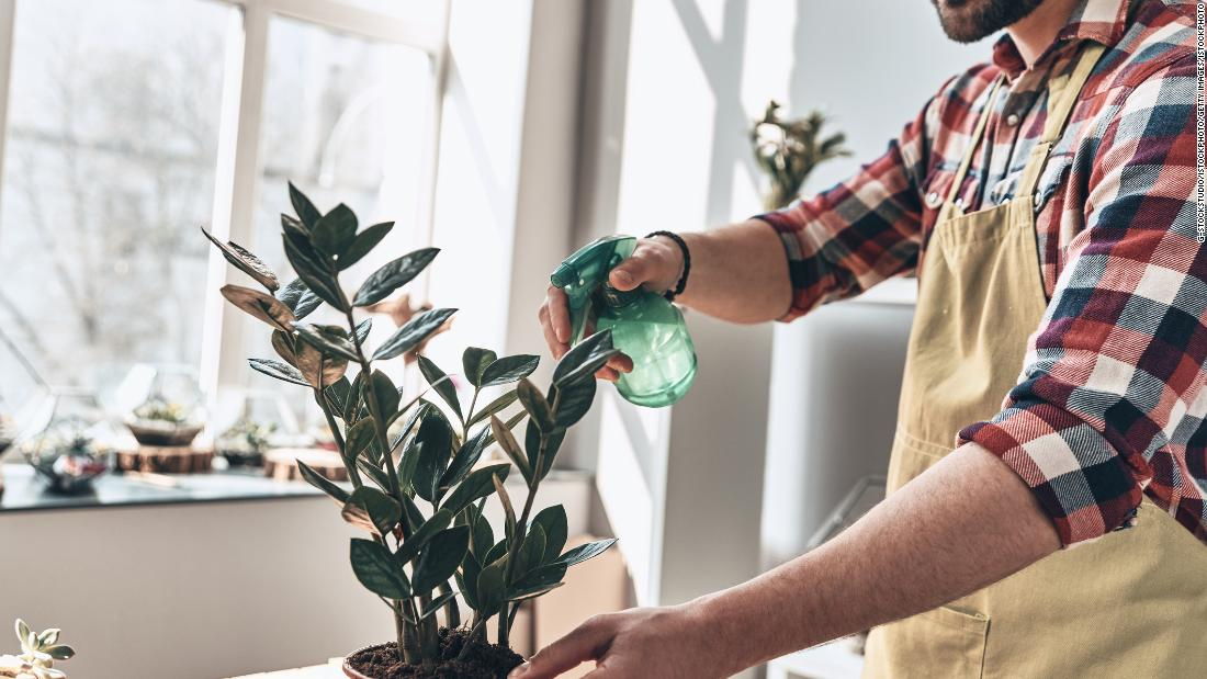 Do you always kill your plants? These 8 products will help you get a green thumb