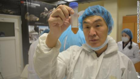Les chercheurs espèrent cloner le poulain.