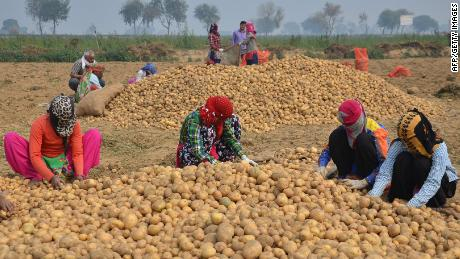 PepsiCo Sues 4 Gujarat Farmers for Cultivating Its Patented Potato