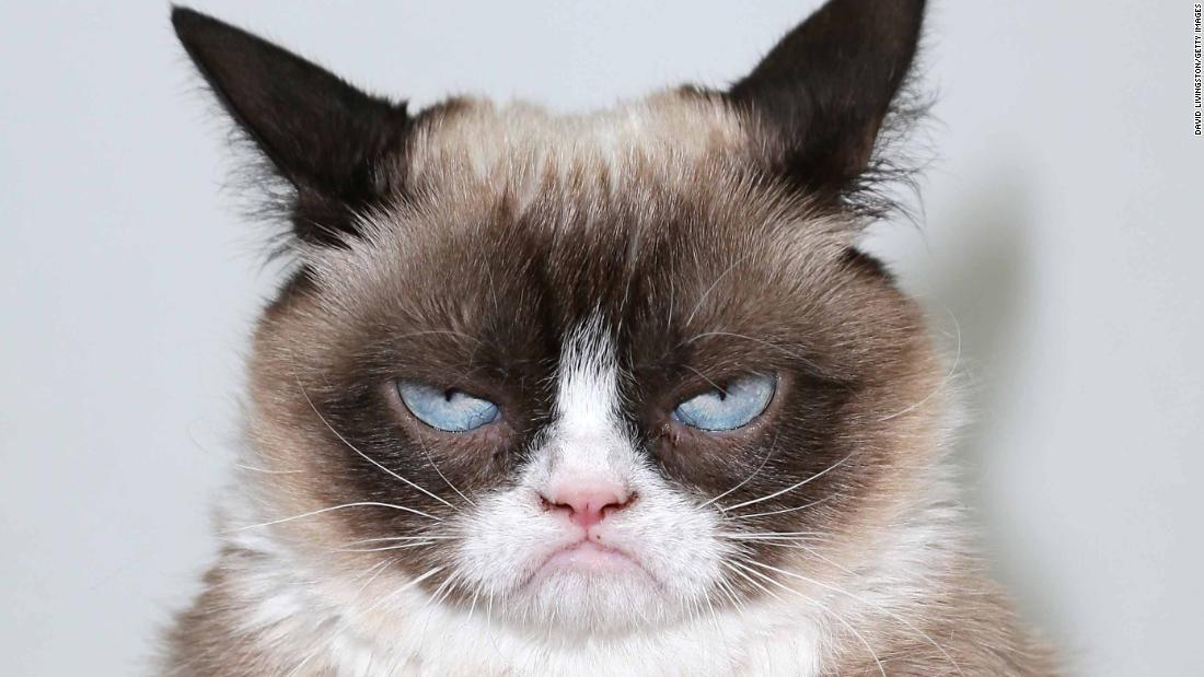 Grumpy Cat, the internet's most famous cat, dead at 7 - CNN