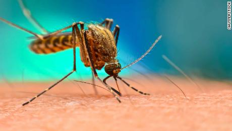 The Philippines declares a national alert after the death of 456 for dengue