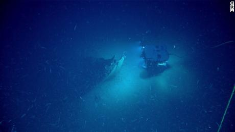 ROV Deep Discoverer approaches the bow of the shipwreck.
