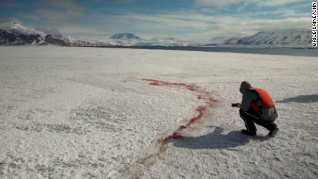 Traces of a polar bear kill.