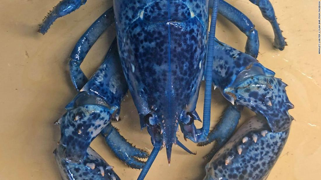 Massachusetts restaurant finds rare blue lobster in shipment, plans to donate to aquarium - CNN