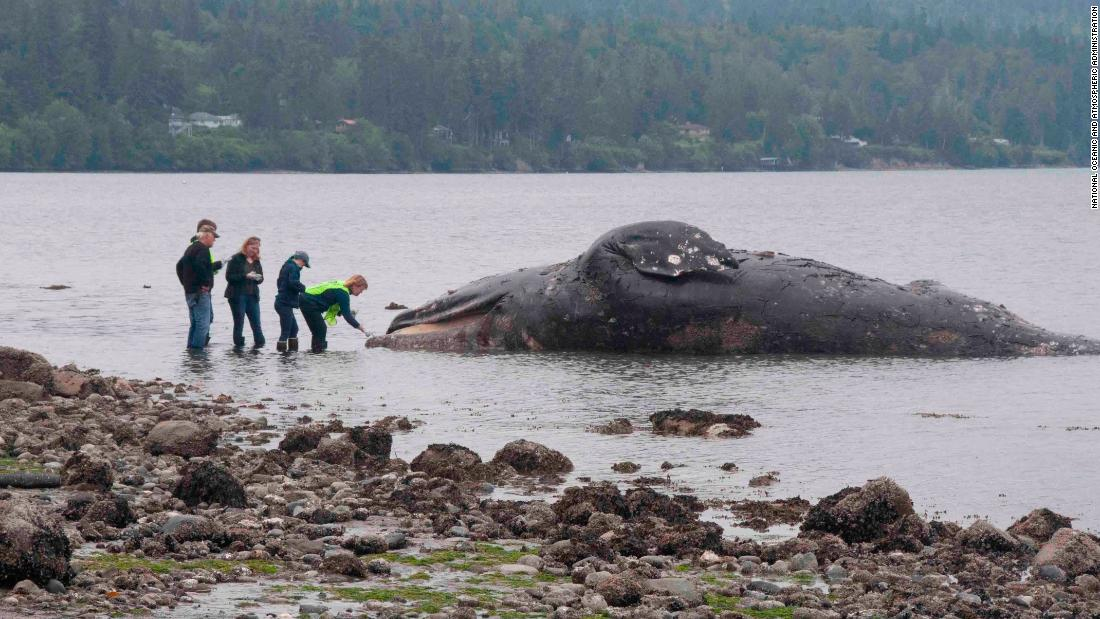 Washington state waterfront landowners are getting an unusual request: Take in dead whales - CNN