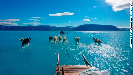 Dogs Walking Through Water Shows Reality Of Greenland's Melting Ice