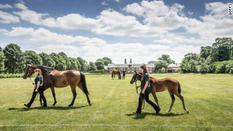 Some horses with entries at Royal Ascot are up for sale.