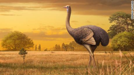 Ancient Europeans lived alongside a half-ton bird nearly 12 feet tall