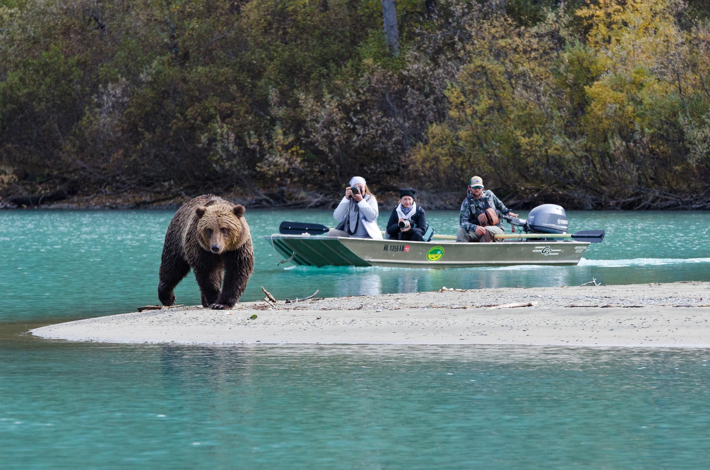 Aljaska - Page 2 190626155246-alaska-summer-bear-viewing