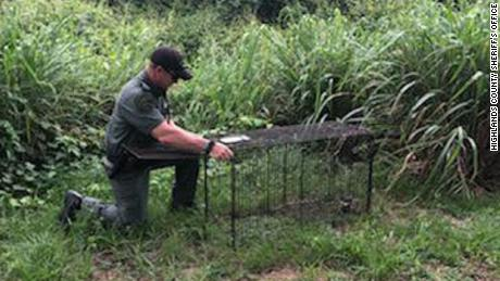 Authorities have so far captured six dogs in the area, the Highlands County Sheriff's Office said