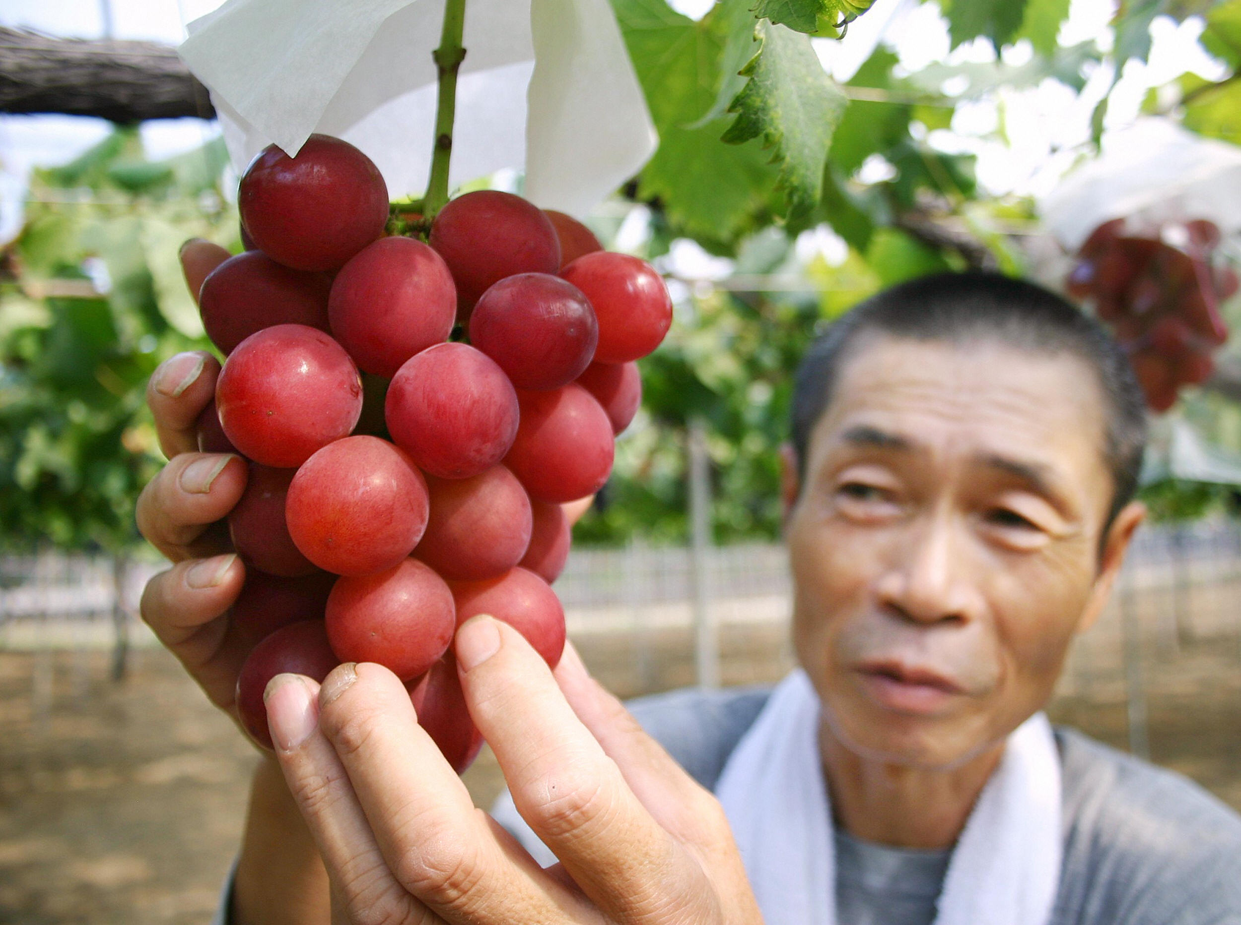 This Bunch Of Grapes Just Sold For 11 000 In Japan Cnn Travel