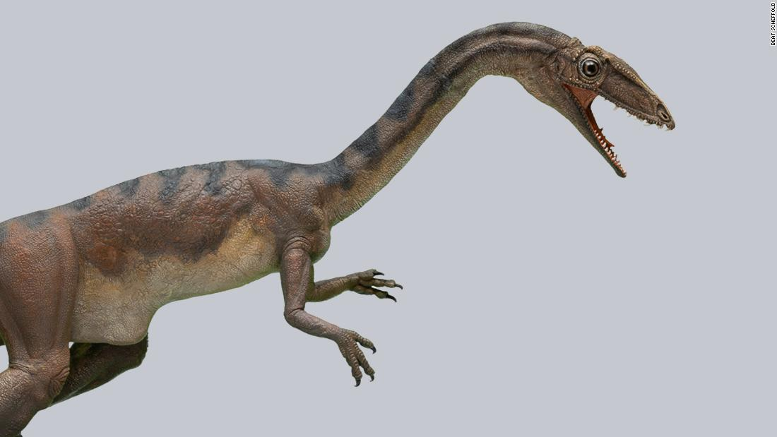 Scientists in Switzerland discover a new dinosaur species - CNN