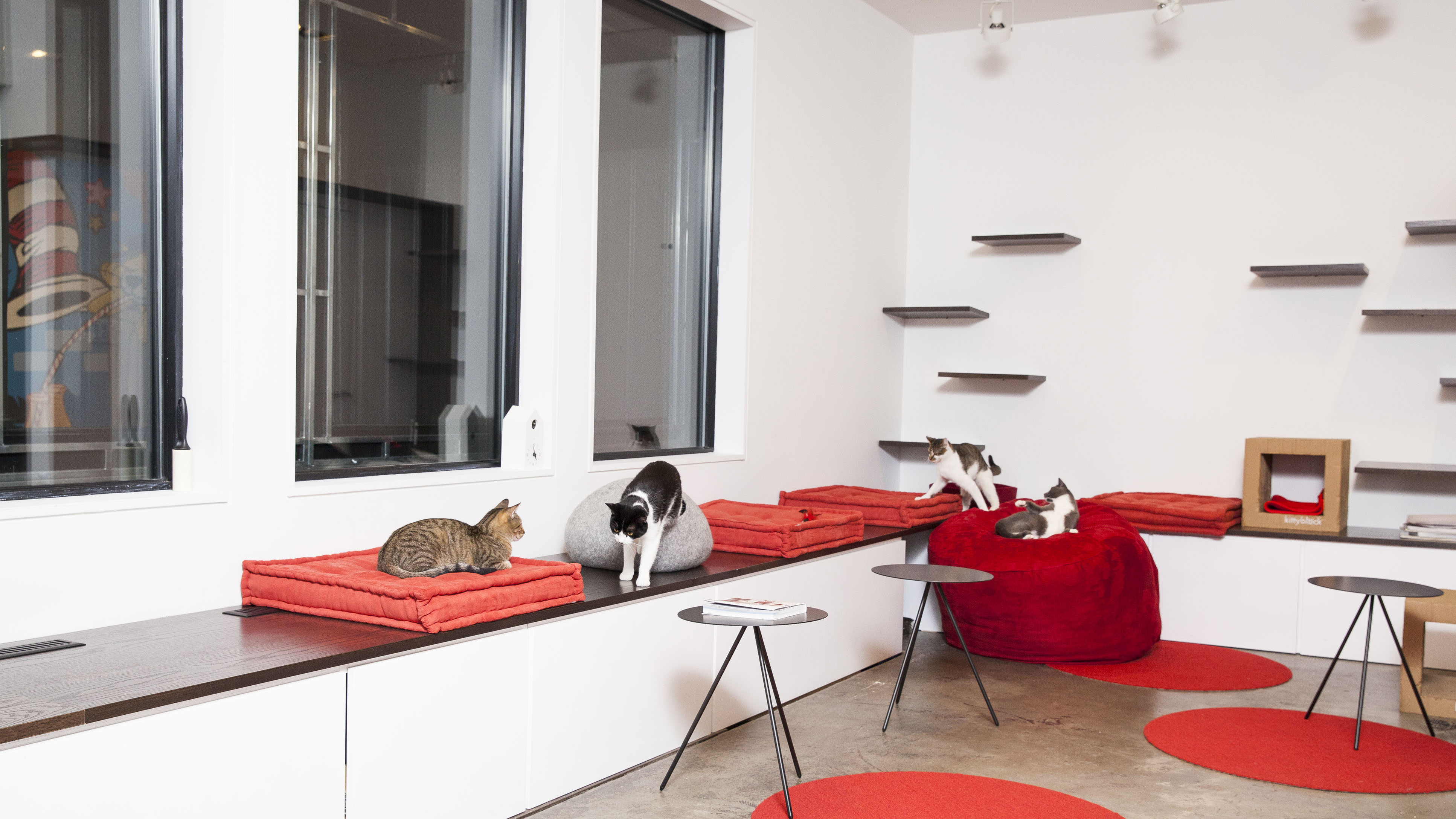 Cat Cafes Where To Get Your Coffee And Feline Fix Around The World Cnn Travel
