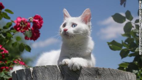Cats understand their names and are probably just choosing to ignore you, a study suggests